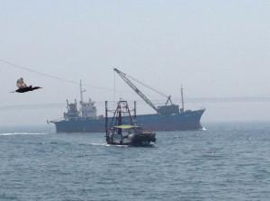橋と船を撮ろうとしたら、いいタイミングで鳥がフレーム・インしてきました。