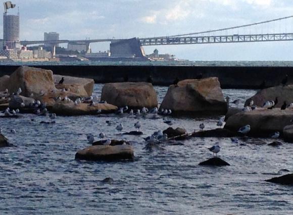 明石海峡大橋と海鳥